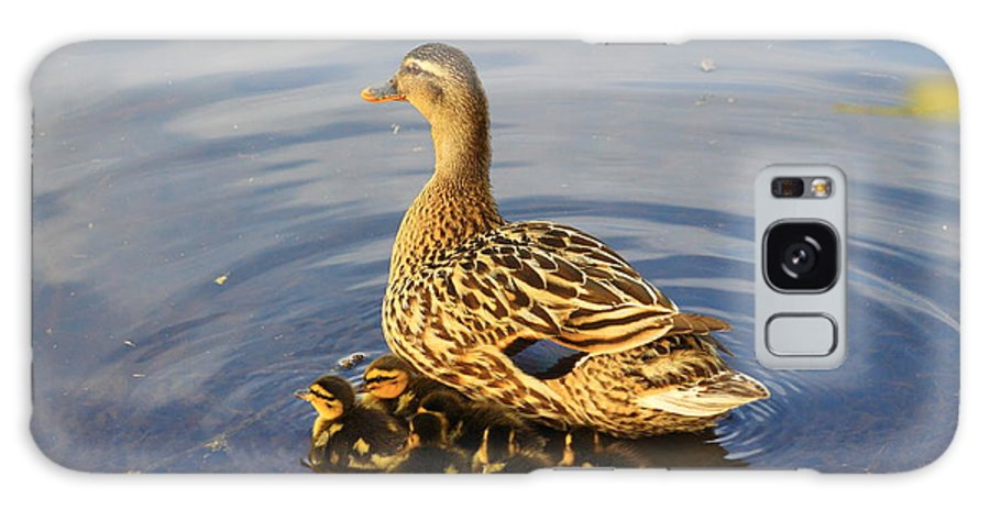 Mallard Galaxy S8 Case featuring the photograph Mama Mallard And Her Ducklings by Mary Koval