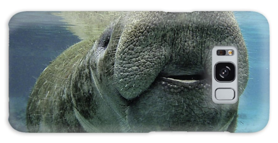 Manatee Galaxy S8 Case featuring the photograph Manatee Smile by Daniel Caron