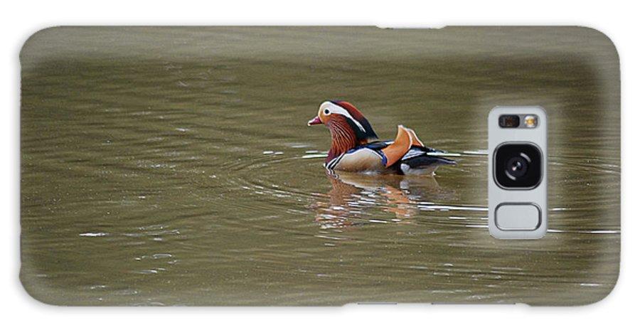 Mandarin Galaxy S8 Case featuring the photograph Mandarin Duck 20130507_45 by Tina Hopkins