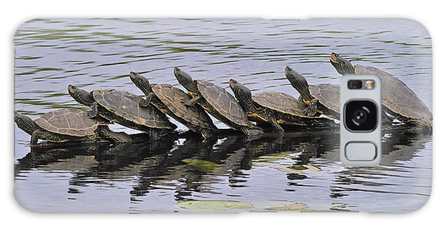 Map Turtles Galaxy S8 Case featuring the photograph Map Turtles by Tony Beck