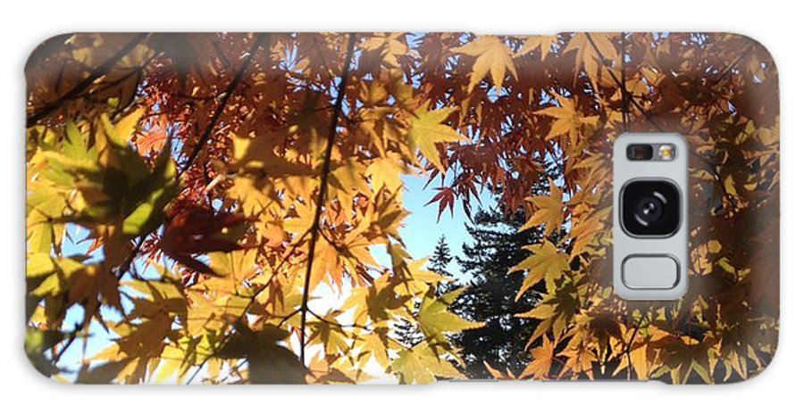 Sun Galaxy S8 Case featuring the photograph Maple In Fall by Kaija Ogan