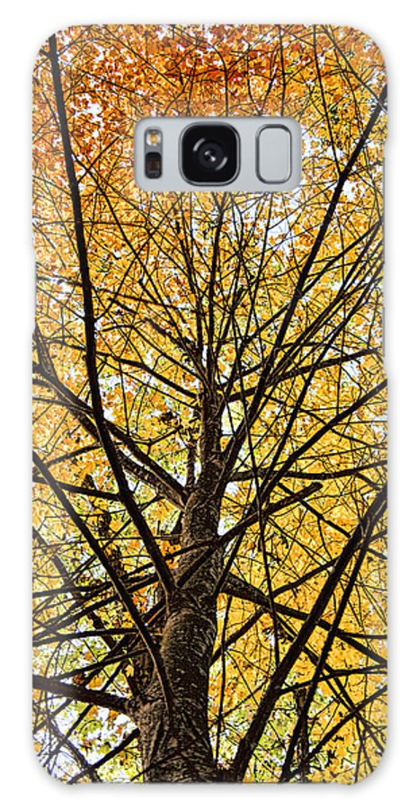 Maple Galaxy S8 Case featuring the photograph Maple by John Crothers