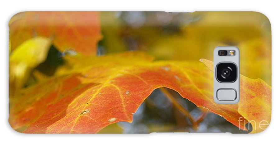Leaves Galaxy S8 Case featuring the photograph Maple Leaf Edges In Autumn by Anna Lisa Yoder