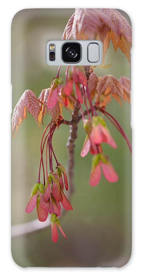 Rusk County Galaxy S8 Case featuring the photograph Maple Leaves by Bernard Lynch
