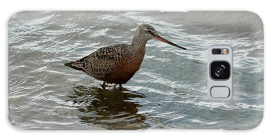 Marbled Godwit Galaxy S8 Case featuring the photograph Marbled Godwit by Lori Tordsen