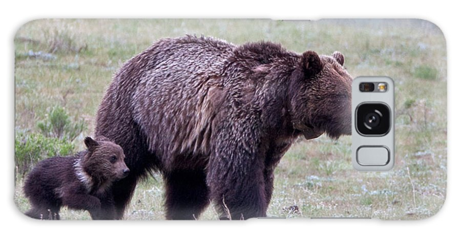 Grizzly Galaxy S8 Case featuring the photograph Marching Mama Grizzly And Cub by Natural Focal Point Photography