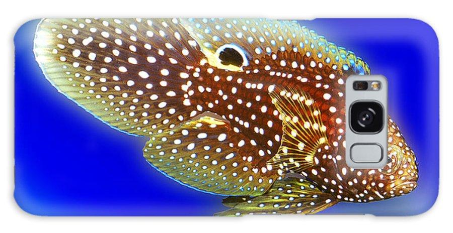 Calloplesiops Altivelis Galaxy S8 Case featuring the digital art Marine Betta Fish by Wernher Krutein
