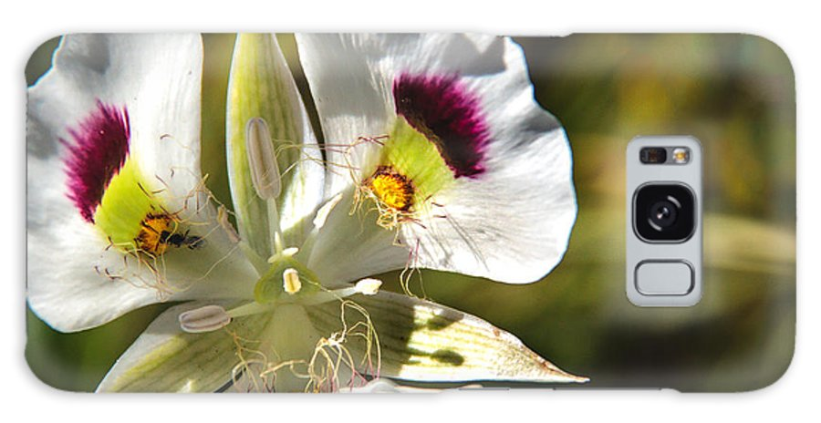Wild Flowers Galaxy S8 Case featuring the photograph Mariposa Lily by Robert Bales