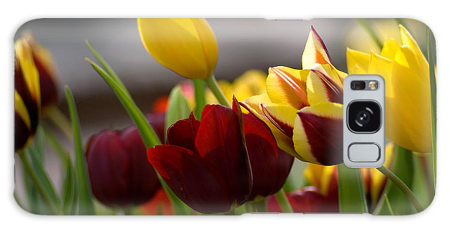 Flower Galaxy S8 Case featuring the photograph Maroon And Gold Tulips by Benjamin Reed