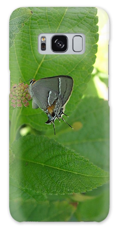 Butterfly Galaxy S8 Case featuring the photograph Martial Scrub Hairstreak Butterfly by Kimberly Perry