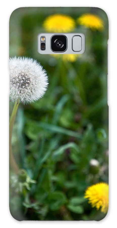 Dandelion Galaxy S8 Case featuring the photograph Maturity by Nicole Couture-Lord