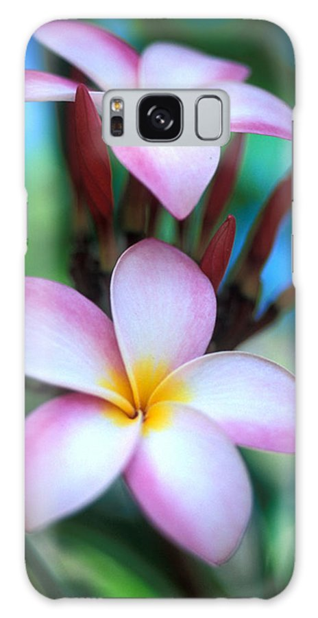 Plumeria Galaxy S8 Case featuring the photograph Maui Plumeria by Kathy Yates