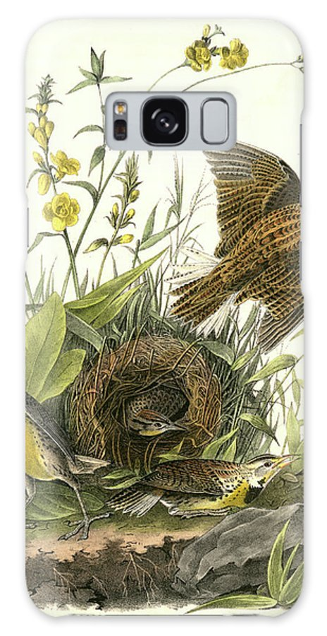 1827 Galaxy S8 Case featuring the drawing Meadow Starling Or Meadow Lark. 1. Male. 2 by Artokoloro