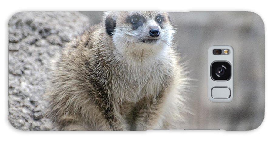 Meerkat Galaxy S8 Case featuring the photograph Meerkat Is Waiting by Yuri Levchenko