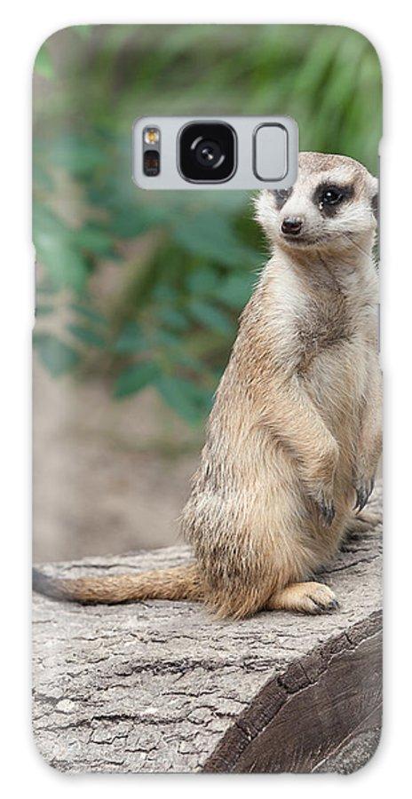 Meerkat Galaxy S8 Case featuring the photograph Meerkat by Shirley Radabaugh