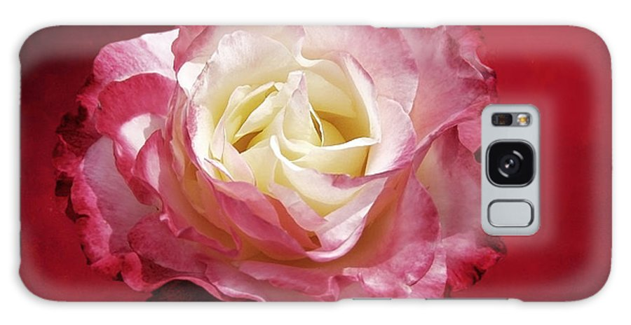 Roses Galaxy S8 Case featuring the photograph Mellow Passion by Ellen Cotton