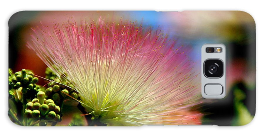 Nature Galaxy S8 Case featuring the photograph Mimosa 2013 by Linda Tucker