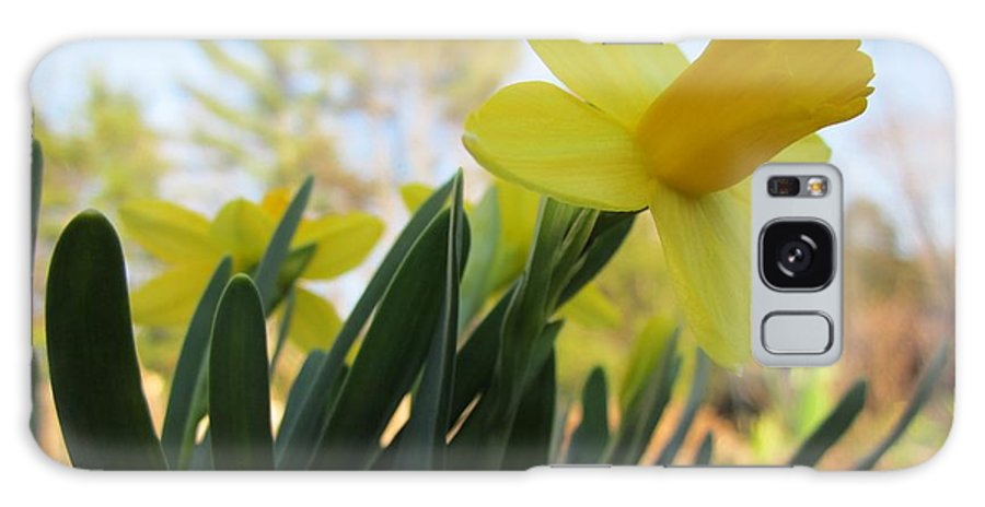 Daffodils Galaxy S8 Case featuring the photograph Mini Daffodils by MTBobbins Photography