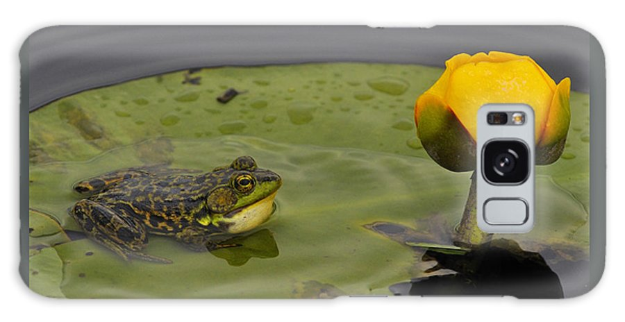 Mink Frog Galaxy S8 Case featuring the photograph Mink Frog On Lilypad by Tony Beck