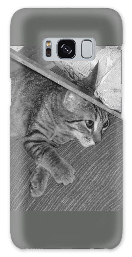 Kitten Galaxy S8 Case featuring the photograph Model Kitten by Pharris Art