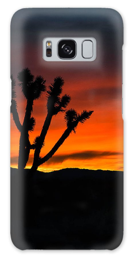 Mojave Galaxy S8 Case featuring the photograph Mojave Morning by Jody Partin