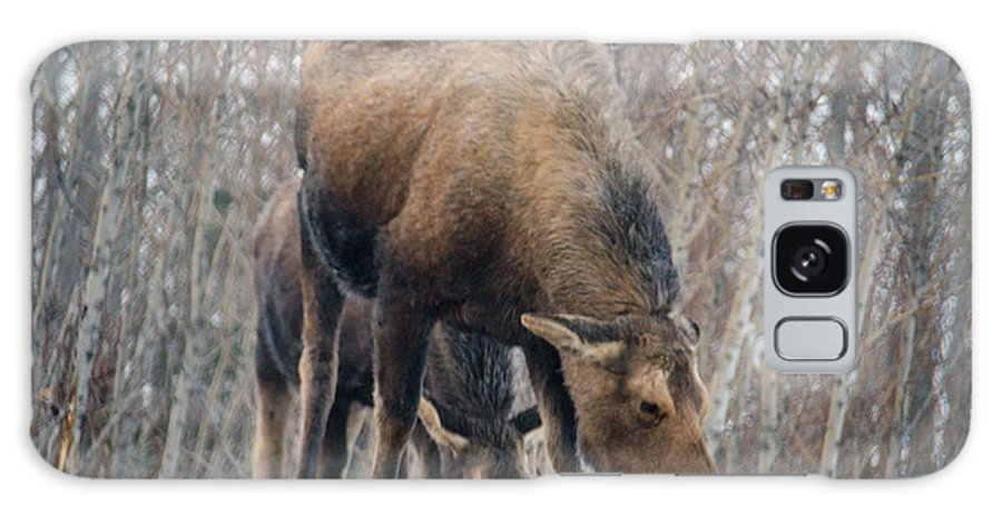 Alaskan Moose Galaxy S8 Case featuring the photograph Mom And Young Moose by Debra Miller