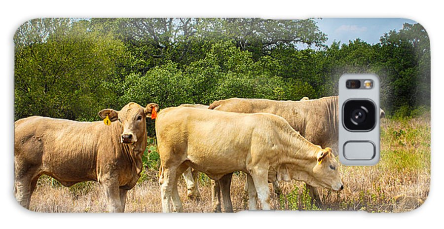 Cow Galaxy S8 Case featuring the photograph Momma's Baby Brahmas by Toma Caul