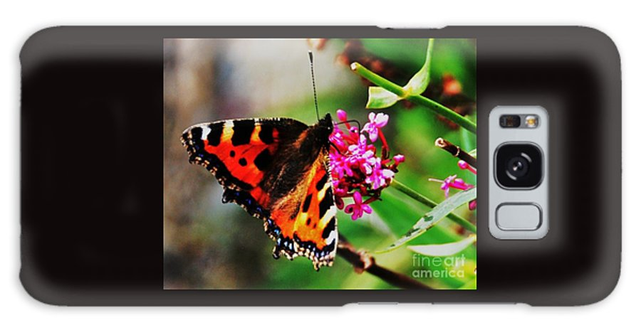 Monarch Butterfly Vivid Orange And Black Wings Blue Highlights Outdoors Beauty Close Up Nature Pink Flowers Bray Ireland Greenery Greeting Card Canvas Print Metal Frame Poster Print Available On T Shirts Throw Pillows Tote Bags Shower Curtains Mugs And Phone Cases Galaxy S8 Case featuring the photograph A Monarch In Ireland # 2 by Marcus Dagan