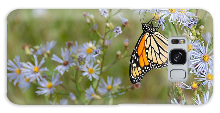 Beautiful Galaxy S8 Case featuring the photograph Monarch Butterfly by James Wheeler