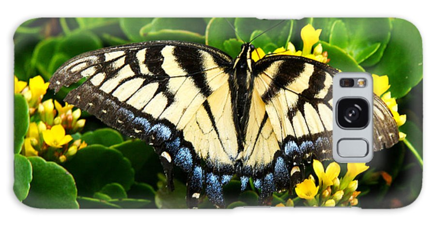 Monarch Butterfly Galaxy S8 Case featuring the photograph Monarch Butterfly by Margo Richter