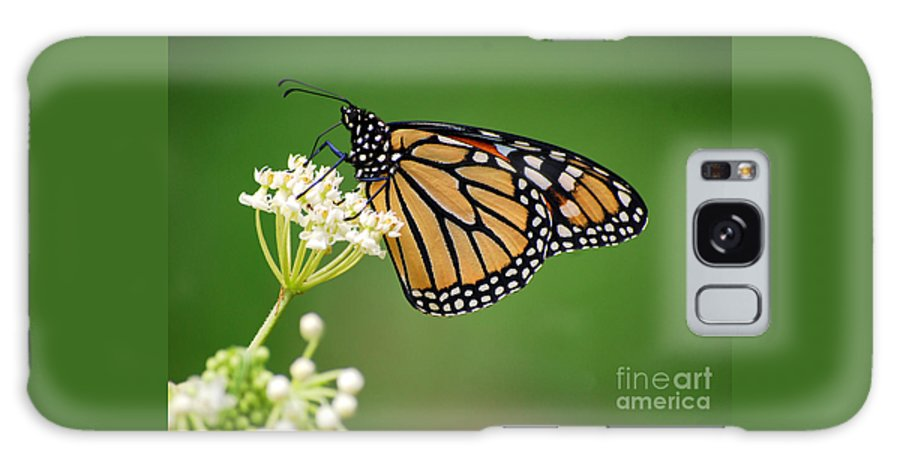 Monarch Butterfly Galaxy S8 Case featuring the photograph Monarch Butterfly On White Milkweed Flower by Catherine Sherman