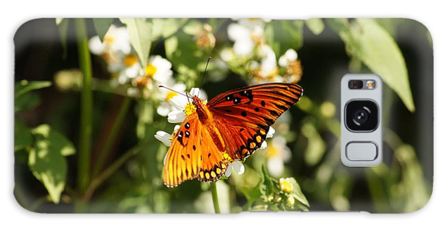 Monarch Butterfly Galaxy S8 Case featuring the photograph Monarch Butterfly by Paul Wilford
