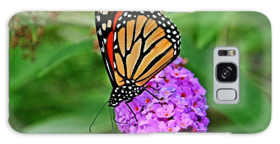 Butterfly Galaxy S8 Case featuring the photograph Monarch On A Butterfly Bush by Heather Allen