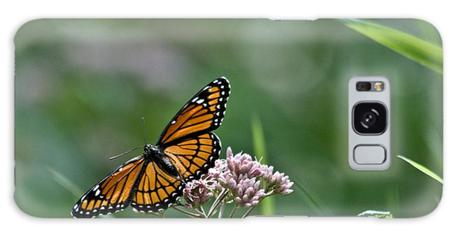Monarch Galaxy S8 Case featuring the photograph Monarch Perch by Cheryl Baxter