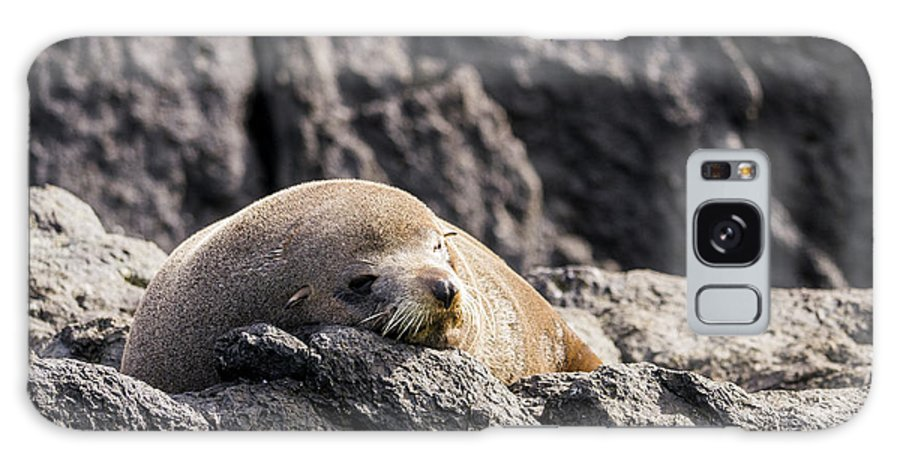 Australia Galaxy S8 Case featuring the photograph Montague Island Seal by Steven Ralser