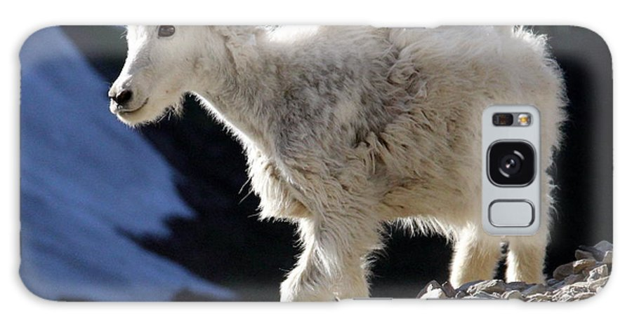 Wildlife Galaxy S8 Case featuring the photograph Montana Mountain Goat Kid by John Cole