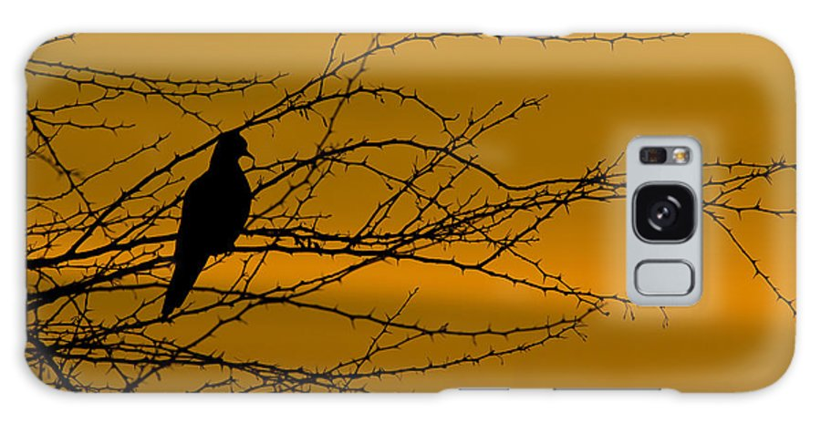 Dove Galaxy S8 Case featuring the photograph Morning Dove by Kelly Gibson