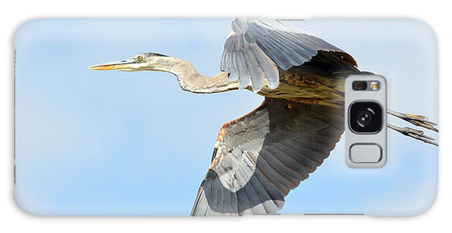 Great Blue Heron Galaxy S8 Case featuring the photograph Morning Flight by Fraida Gutovich
