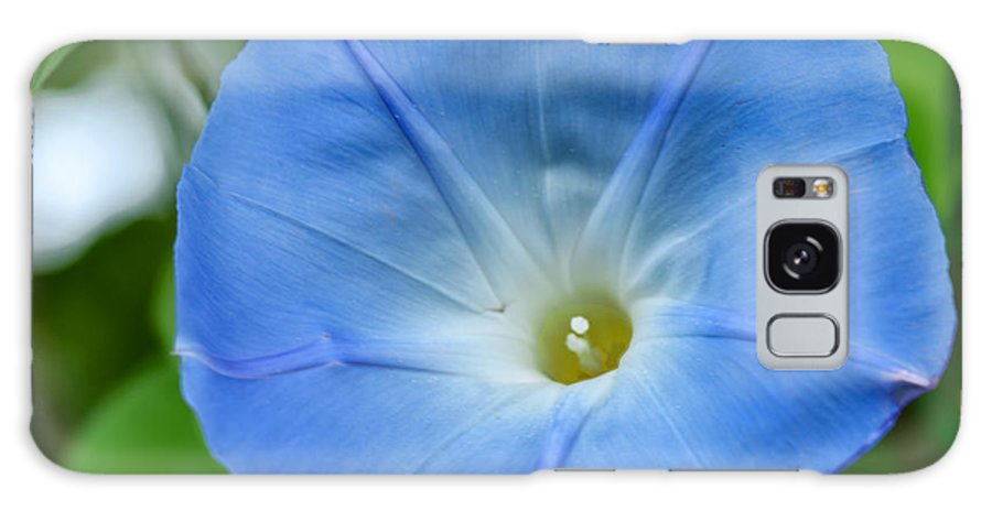 Morning Glory Flower Garden Green Blue Yellow White Vine Galaxy S8 Case featuring the photograph Morning Glory by Patton Imagery