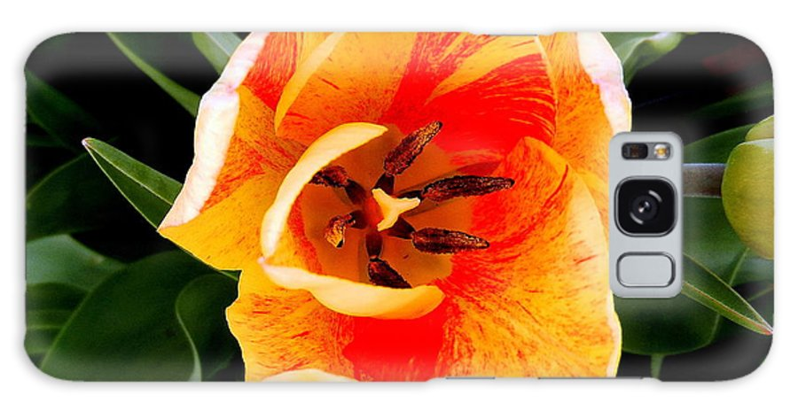 Taken Of A Beautiful Tulip In The Morning Hours. Galaxy S8 Case featuring the photograph Morning Surprise by Sheri Copeland