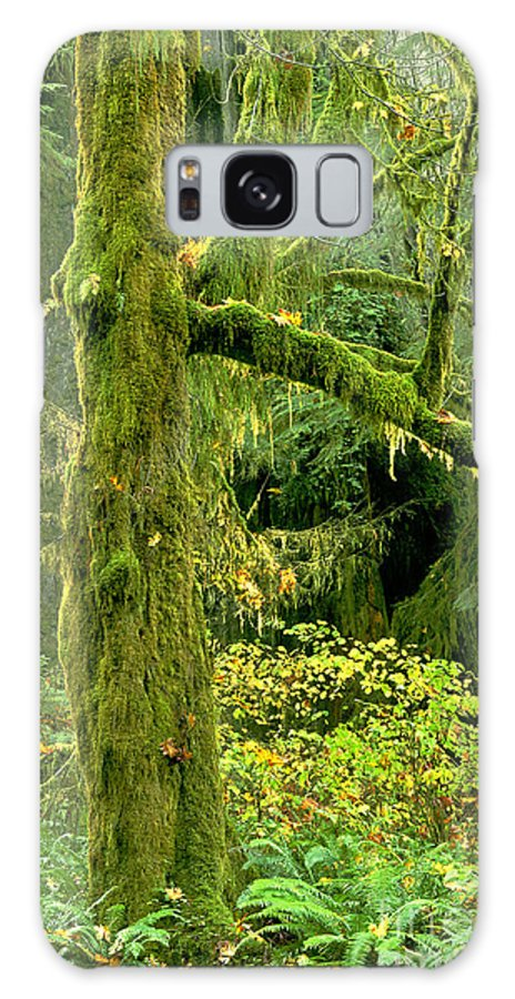 Big Leaf Maple Galaxy S8 Case featuring the photograph Moss Draped Big Leaf Maple California by Dave Welling