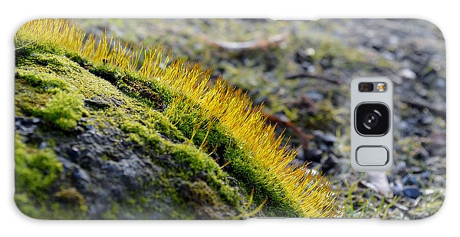 Close-up Galaxy S8 Case featuring the photograph Moss In The Light by Felicia Tica