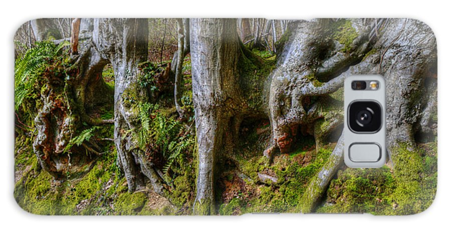 Tree Galaxy S8 Case featuring the photograph Mossy Woodland by Mick House