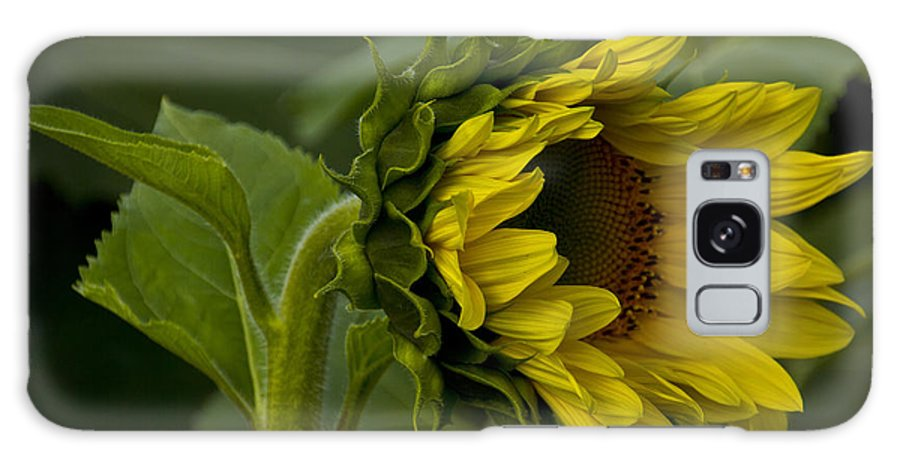 Nature Galaxy S8 Case featuring the photograph Mostly Open Sunflower by Bill Woodstock