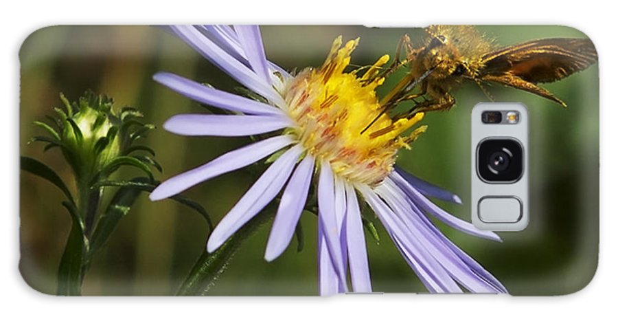 Nature Galaxy S8 Case featuring the photograph Moth Feeding On Aster Dragon by Belinda Greb
