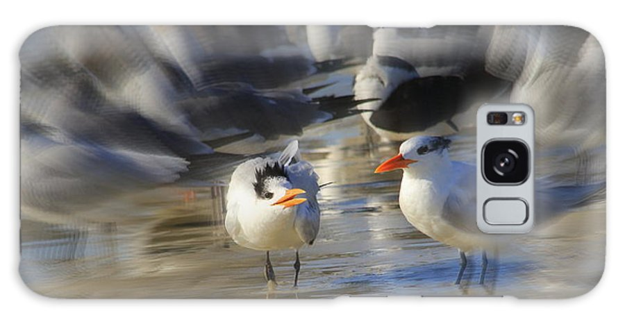 Royal Tern Galaxy S8 Case featuring the photograph Mother And Child by Cindy Reilley