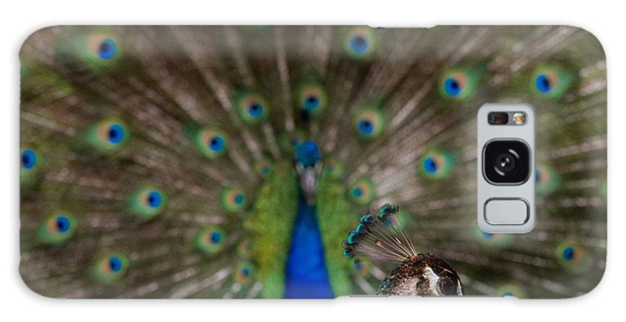 Peacock Galaxy S8 Case featuring the photograph Mother Bird by Kathleen Odenthal