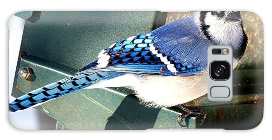 Bird Galaxy Case featuring the photograph Mr. Blue Jay l by Rennae Christman