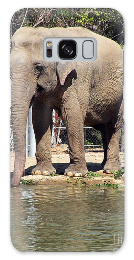 Elephant Galaxy S8 Case featuring the photograph Mr. Elephant Sipping Water by Jillyin Calhoun
