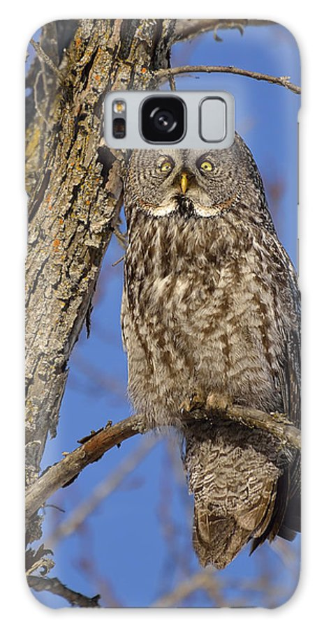 Great Grey Owl Galaxy S8 Case featuring the photograph Mr. Gray by Joshua McCullough